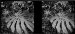 EBH_TropicalStereo_006