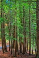 TallTrees_Orton