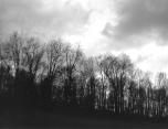 Trees - Jeffersonville NY - 2007_HNU